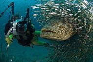 Đến Koh Tao, Thái Lan lặn biển cùng cá voi