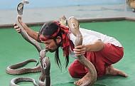 Khám phá những điều thú vị tại trại rắn Thái Lan