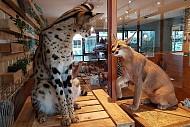 Trào lưu việc nuôi động vật hoang dã trong quán cà phê tại Thái Lan.
