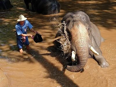 Trải nghiệm một ngày làm quản tượng tại Chiang Mai, Thái Lan