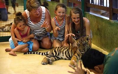Đùa giỡn với hổ ở đảo Phuket - du lịchThái Lan.