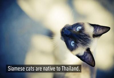 Những điều cực kỳ thú vị về đất nước Thái Lan