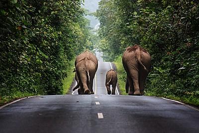 Trải nghiệm vườn quốc gia Khao Yai trong chuyến du lịch Thái Lan