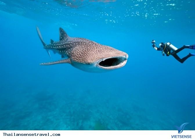Lặn khám phá sinh vật biển