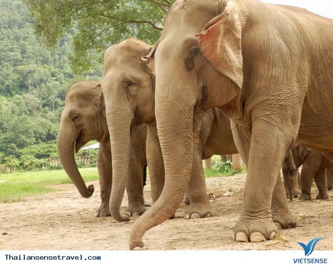 Tham quan khu bảo tồn voi