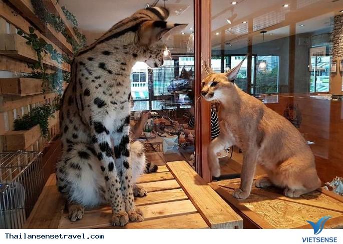 Trào lưu việc nuôi động vật hoang dã trong quán cà phê tại Thái Lan. - Ảnh 4