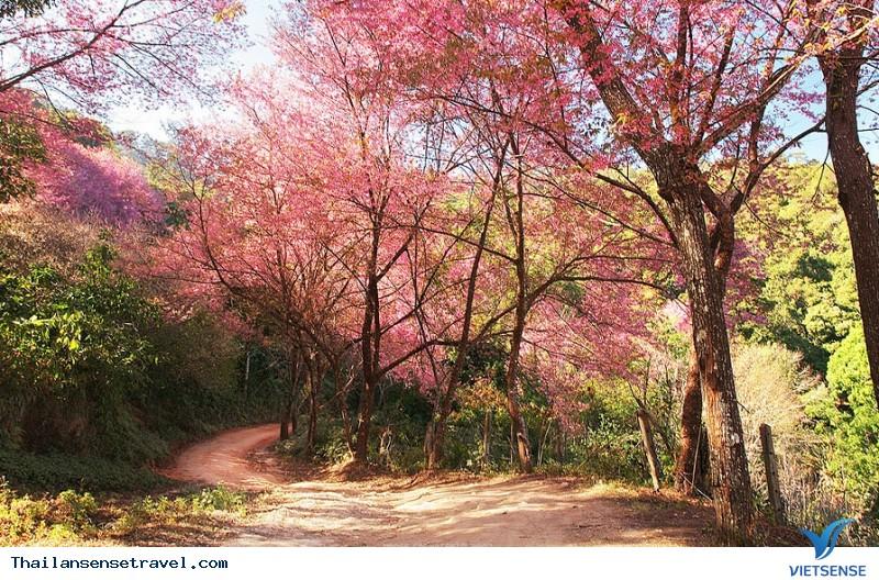 Những địa điểm ngắm Hoa Anh Đào