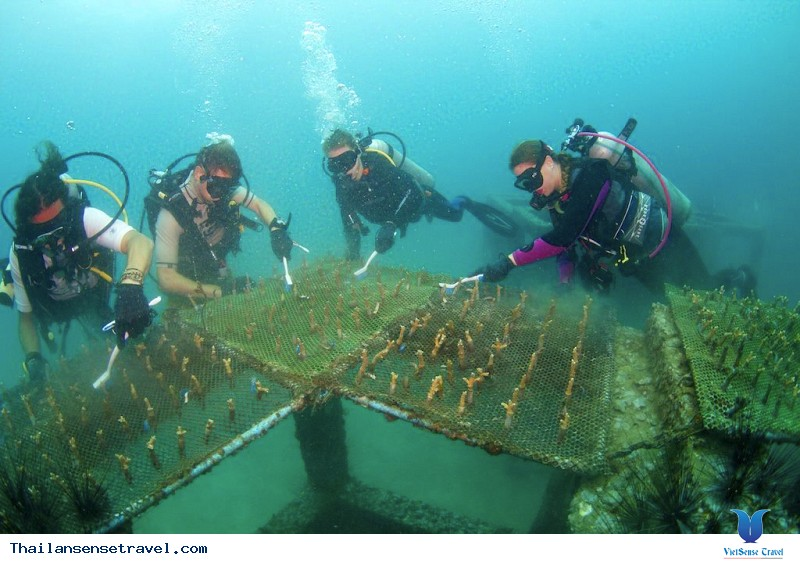 Ngày Thứ 4: Đảo Phi Phi – Biển Ao Nang - RaiLay
