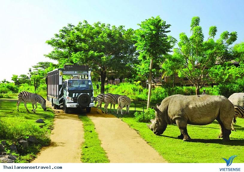 Vui chơi tại vườn thú Khao Kheow ở Pattaya của Thái Lan . - Ảnh 2
