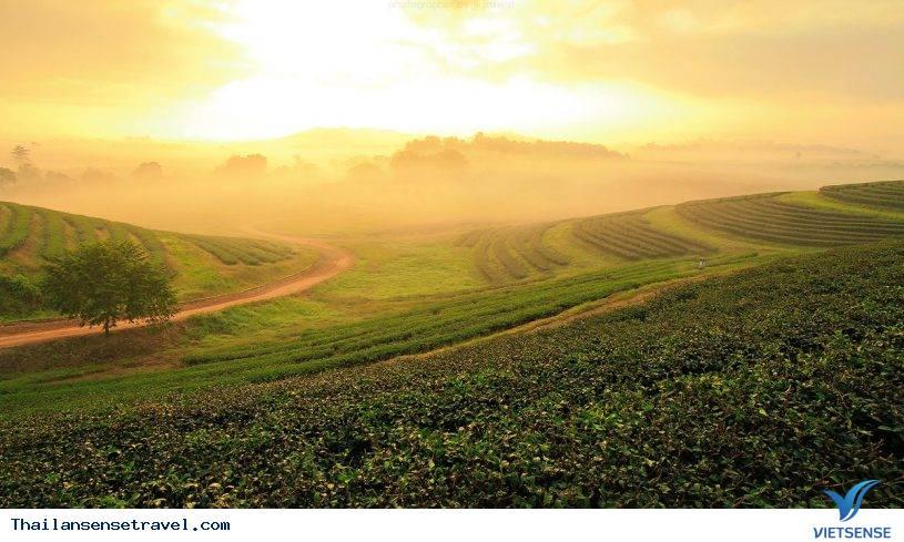 Singha Park - nông trường miền quê tươi sáng - Ảnh 2