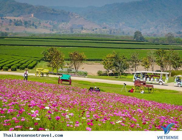 Singha Park - trang trại lớn nhất Thái Lan