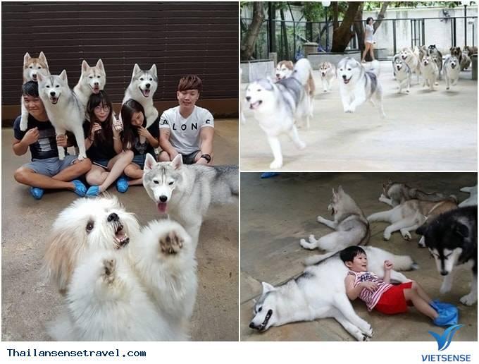 Khám phá 5 quán cafe thú cưng luôn đông khách tại Thái Lan - Ảnh 1