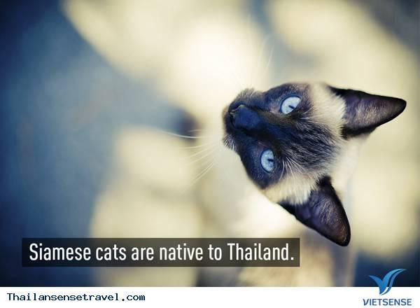Những điều cực kỳ thú vị về đất nước Thái Lan - Ảnh 2