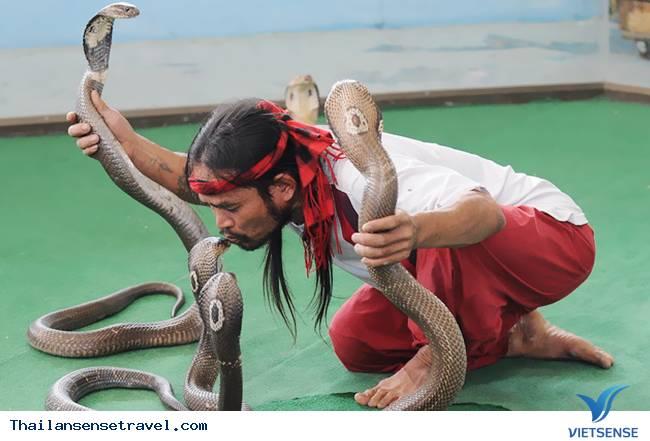 Khám phá những điều thú vị tại trại rắn Thái Lan - Ảnh 2