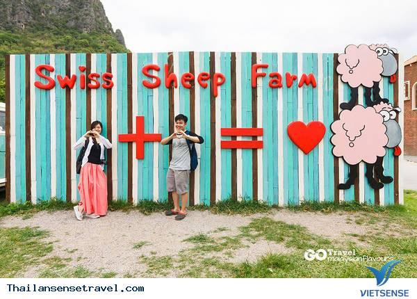 Swiss Sheep Farm - Ảnh 3