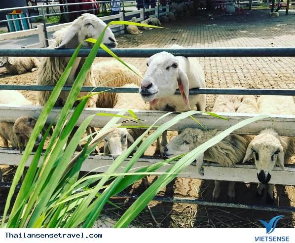 Swiss Sheep Farm - Ảnh 4