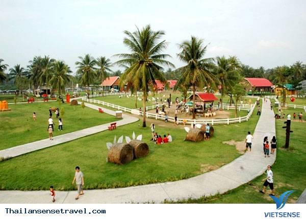 Pattaya Sheep Farm - Ảnh 1