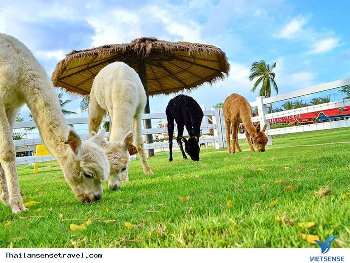 Pattaya Sheep Farm - Ảnh 2
