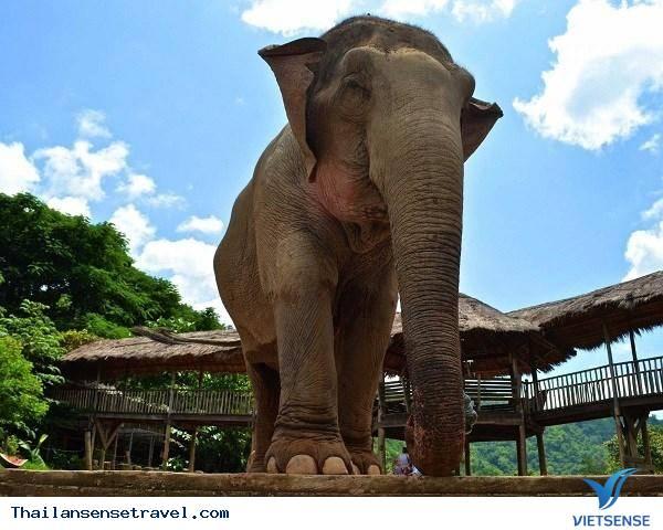 Tour Du Lịch Thái Lan Bangkok – Pattaya 5 Ngày 4 Đêm