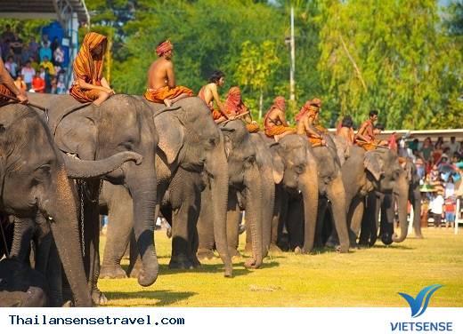 Lễ hội voi Surin, tỉnh Surin - Ảnh 1