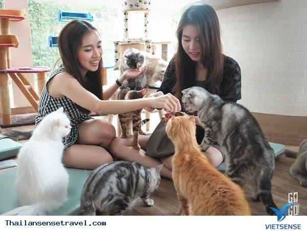 Klom Cat